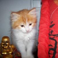Photo de profil de Emy