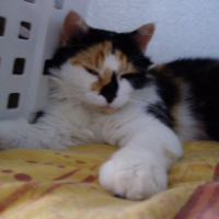 Photo de profil de Princesse