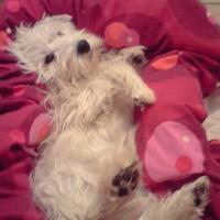 Photo de profil de Catsumi