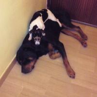 Photo de profil de Sonny