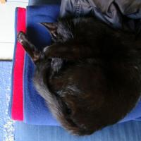 Photo de profil de Tcherna