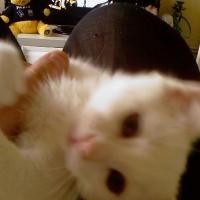 Photo de profil de Gucci2