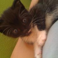 Photo de profil de Dora