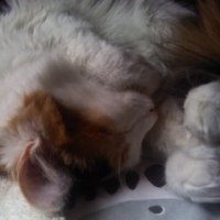 Photo de profil de Piñoufe
