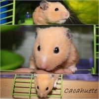 Photo de profil de Cacahuete