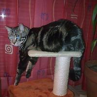 Photo de profil de Calico