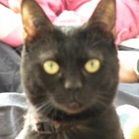 Photo de profil de Lilo