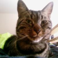 Photo de profil de Pichenette