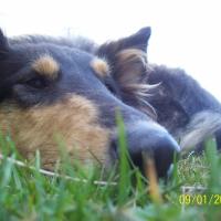 Photo de profil de Gwen