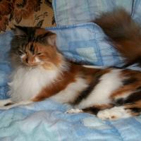 Photo de profil de Cosette