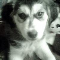 Photo de profil de Ossa