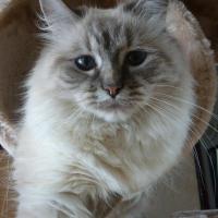 Photo de profil de ézye