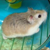 Photo de profil de Minipouce