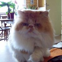 Photo de profil de Véga