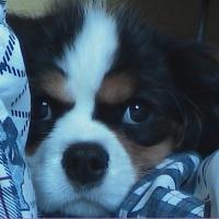 Photo de profil de Betsy