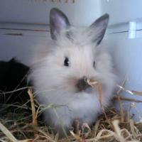 Photo de profil de Twix