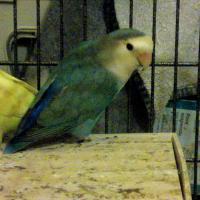 Photo de profil de Lagon