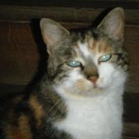 Photo de profil de Praline