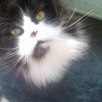 Photo de profil de Sushi
