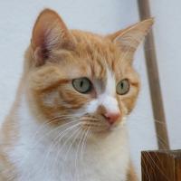 Photo de profil de Katoche