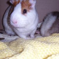 Photo de profil de Charlie
