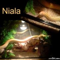 Photo de profil de Niala