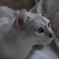 Photo de profil de Gem's gneiss