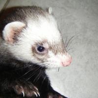 Photo de profil de Thimotey
