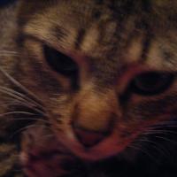 Photo de profil de Amia