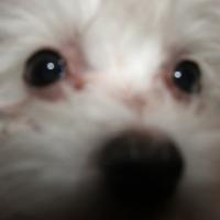 Photo de profil de Maggie