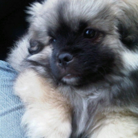 Photo de profil de Khimo