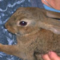 Photo de profil de Bistou