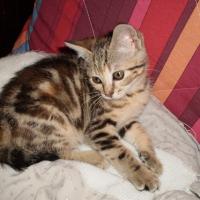 Photo de profil de Unuka