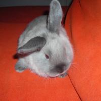 Photo de profil de Smocky