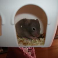 Photo de profil de Kitty