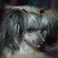 Photo de profil de D'es si belle du doux mystère