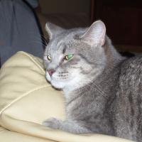 Photo de profil de Cheyenne