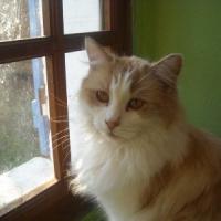 Photo de profil de Minouche