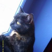 Photo de profil de Kira