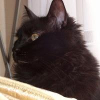 Photo de profil de Corto