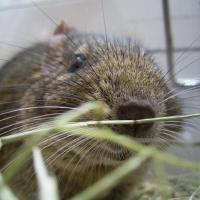 Photo de profil de Pepper pote junior