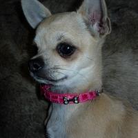 Photo de profil de Enaïe