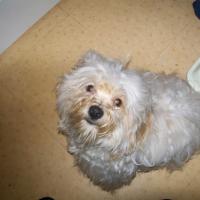 Photo de profil de Droopy