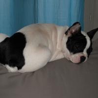 Photo de profil de Enya