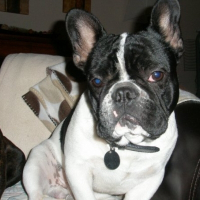 Photo de profil de Douglas