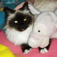 Photo de profil de Sapristie