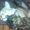 Photo de Mes 2 bébés