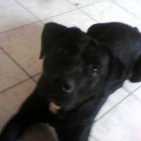 Photo de profil de Coyotte
