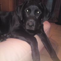 Photo de profil de Baloo
