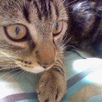 Photo de profil de Myrtille
